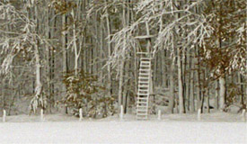 Landschaftsfoto Winterwald mit Jägerstand